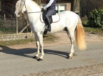 PAARDENHANDEL MEES JAN BVBA  - paarden-te-koop
